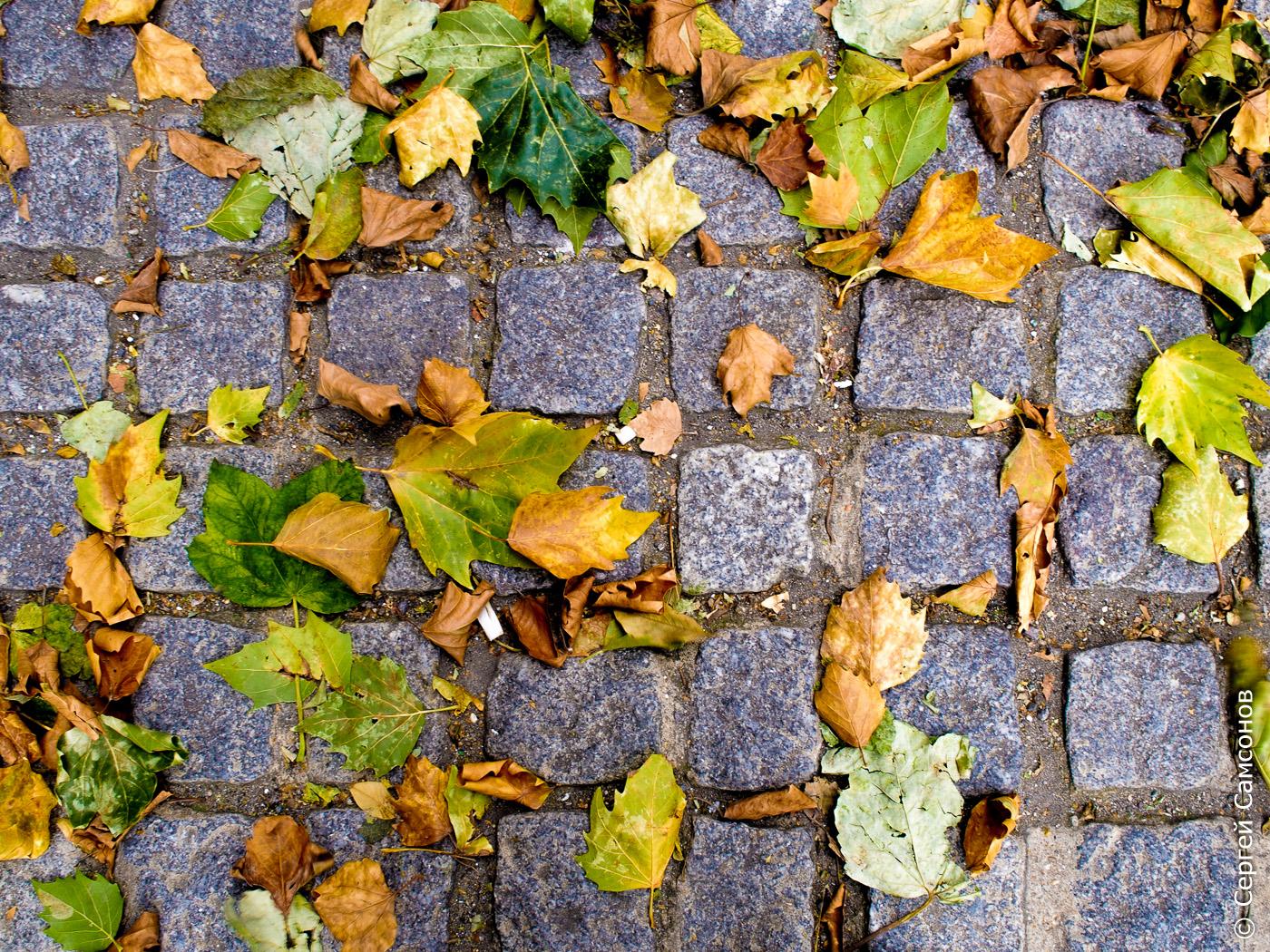 Падали листья